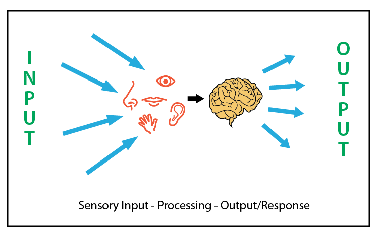 research sensory integration paper An overview of sensory processing disorder paper 2444 an overview of was the first to use the term sensory integration dysfunction in 1963 and described.